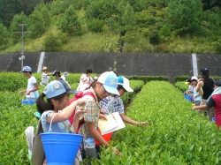 Hands-on Experience Facilities of Enjoying Green Tea
