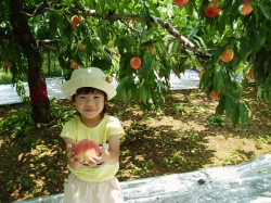 Fruit Picking